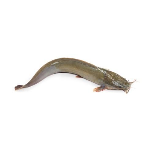 Magur Fish (মাগুর মাছ) - 1kg