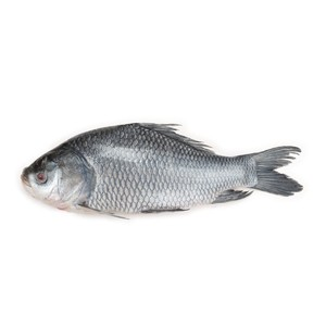 Katla Fish Medium (কাতল মাছ) - 1kg