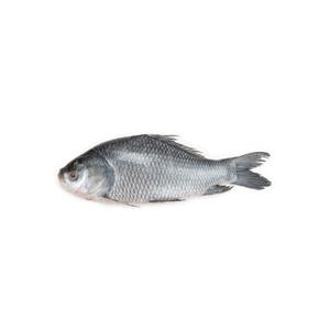 Katla Fish Medium - 1kg