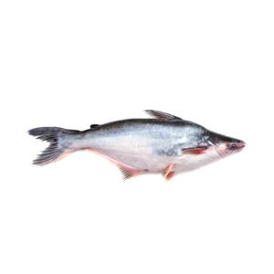 Pangas (Medium) - 1kg