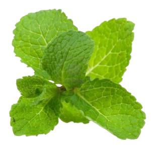 Mint Leaves (Pudina) - 100gm