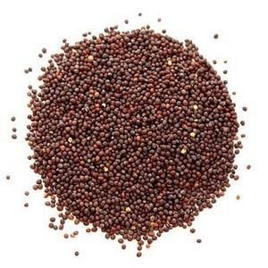 Mustard Seed Red (Shorisha) - 100gm