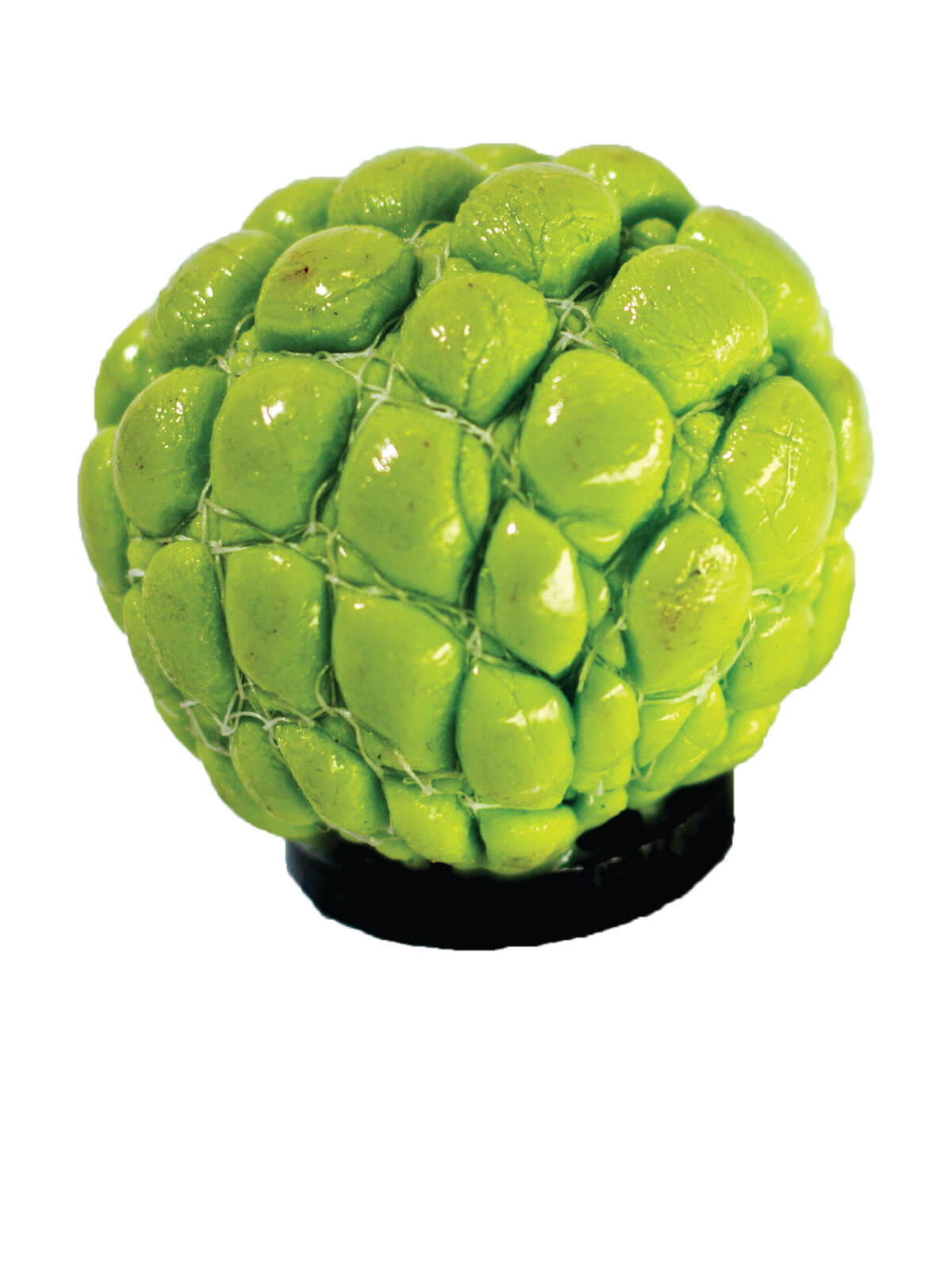 Sugar Apple Freeze Magnet