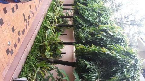 Plantation & Gardening