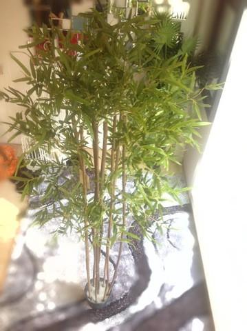 Bamboo Plant/2-30J