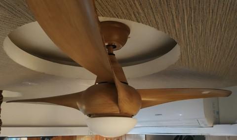 2053/Classical Fan